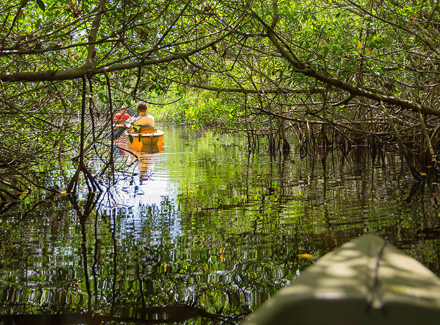 Kayaking in Mangrove Tunnels in Everglades National Park